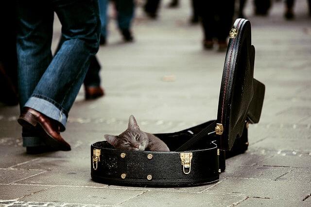 Música de gatos
