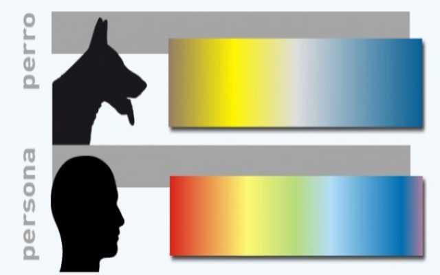 Los perros ven en color