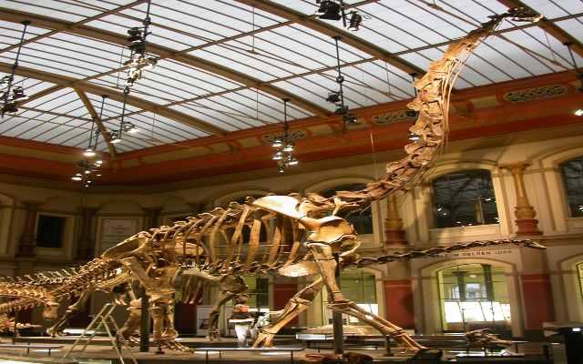 Museos sobre dinosaurios interesantes